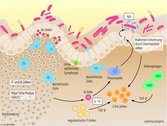 neurodermitis darmflora