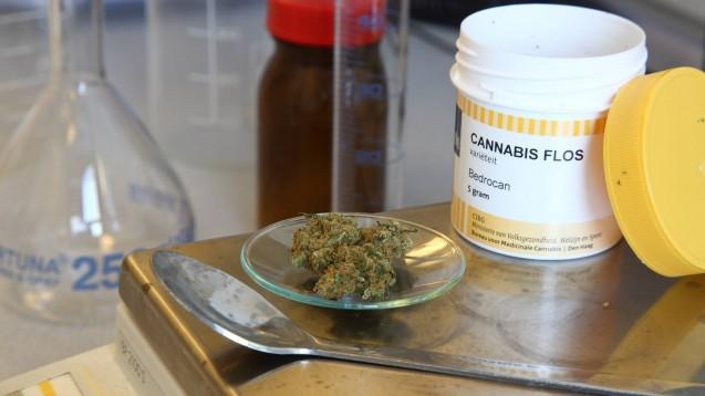 Der GKV-Spitzenverband und der Deutsche Apothekerverband verhandeln schon länger zu einer neuen Cannabis-Vergütung für Apotheker. Nun hat der GKV-SV die Schiedsstelle angerufen. (b/Foto: imago images / epd)