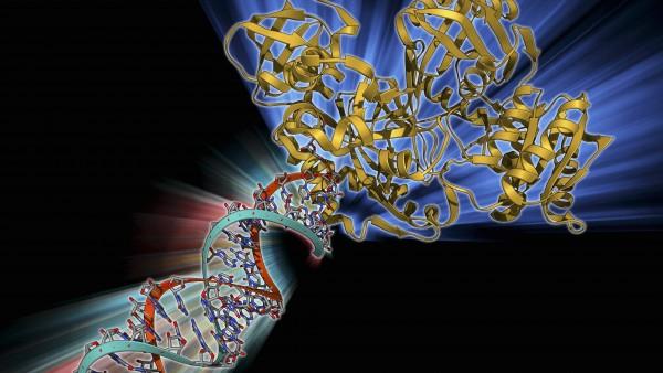 Der RNA dazwischenfunken: So wirkt Onpattro bei Transthyretin-Amyloidose