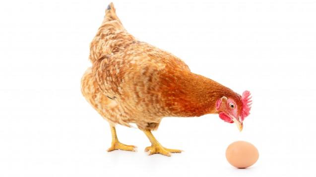 Ohne Honorierung keine Motivation - und ohne Praxis-Impulse kein Bedeutungszuwachs. Die Probleme mit den pharmazeutischen Dienstleistungen erinnern an die Henne und das Ei. (Foto:                                                                                                          Anatolii                                                                   / stock.adobe.com)