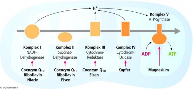 Statine-und-Coenzym-Q10_02.EPS