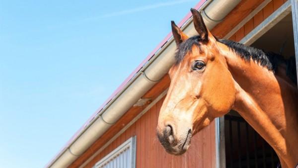 Werbung für Pferdesalbe mit BVDA-Siegel verboten