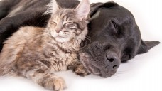 Ab März 2018 gibt es Praziquantel auch für Hund und Katze nur noch auf Rezept. (Foto: grafikplusfoto / Fotolia)