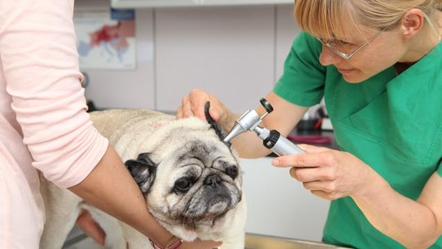 Immer mehr Tierarztpraxen sind in Fremdbesitz. (Foto: picture alliance/JOKER)