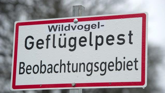 Alle Bundesländer haben inzwischen Schutzmaßnahmen gegen die Vogelgrippe-Epidemie ergriffen. (Foto: dpa)