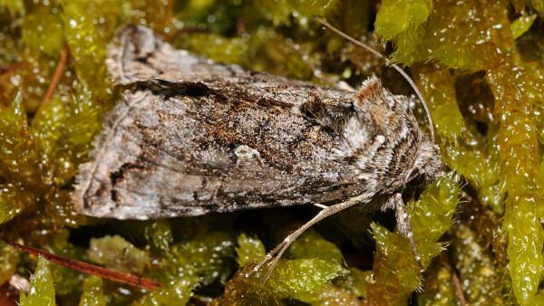 Arzneistoffe im Abwasser bedrohen möglicherweise auch Schmetterlinge