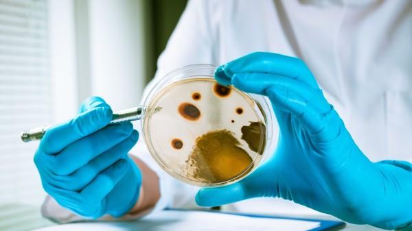 Forscher schaffen ein Minimal-Bakterium