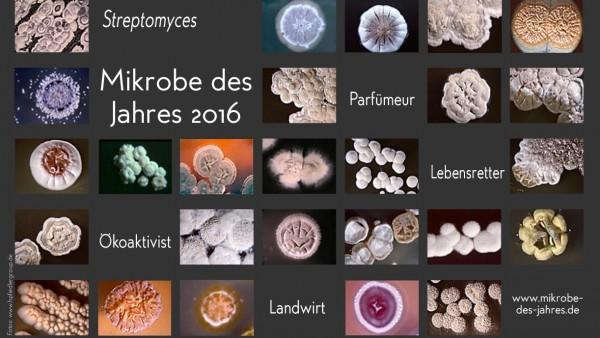 """Der """"Pharmazeut unter den Mikroben"""""""