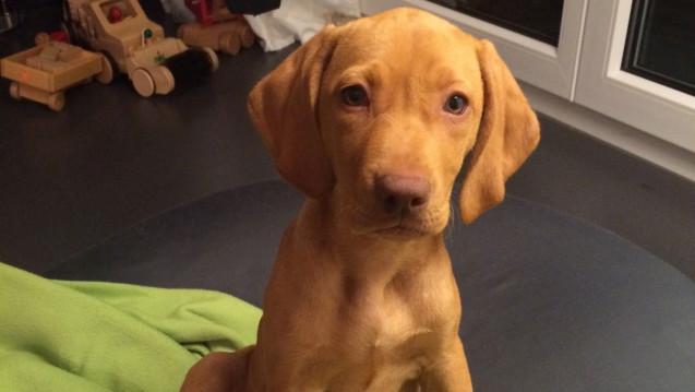 Ab 1. März 2018 braucht Hundemädchen Lotta ein Rezept für die Entwurmung mit Droncit. (Foto: DAZ.online)