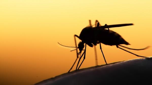 Was ist der beste Mückenschutz?
