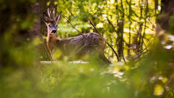 Husten, Schnupfen, Heiserkeit – Die Apotheken der Wildtiere