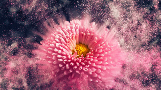 Gerade zur Allergie-Hauptsaison klagen Apotheker über Engpässe bei Antihistaminen. (Foto: Lightboxx / stock.adobe.com)