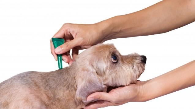 Für Hunde ist Fipronil als Spot-on-Präparat in der Apotheke zu haben. (Foto:tatomm / Fotolia)
