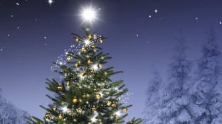 Der unsterbliche Weihnachtsbaum
