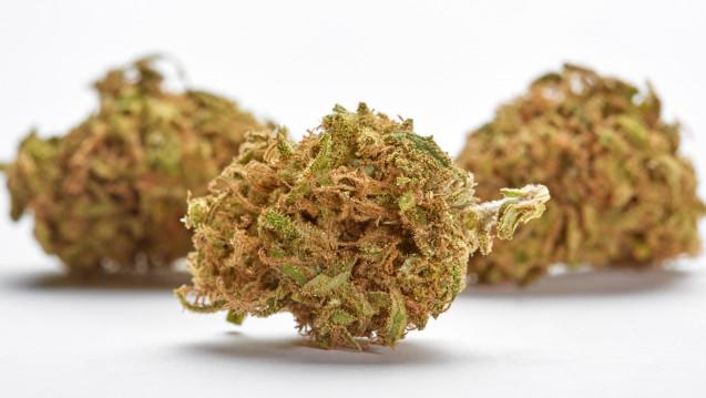 Seit Mitte März gibt es Cannabis-Blüten auf Kassenrezept aus der Apotheke. (Foto: Michael / Fotolia)