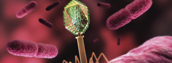 Angriff der Bakterienfresser