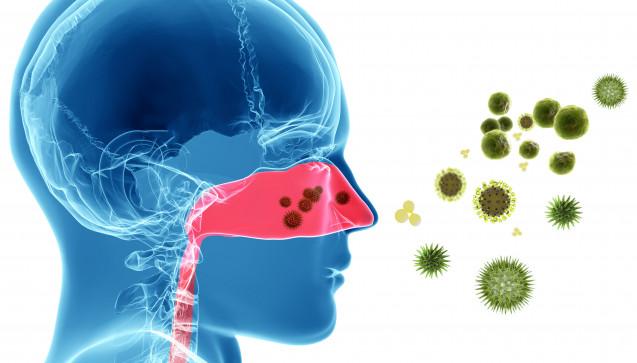O wie Oberflächenprotein: Nachdem Erkältungsviren in die Nase oder den Rachen eingedrungen sind, binden sie an das ICAM-1 (Inter Cellular Adhesion Molecule) Oberflächenprotein der Schleimhaut, und gelangen dann in die Zellen. Dort vermehren sie sich und zerstören die Zelle dabei, wodurch das Immunsystem auf den Plan gerufen wird. (Ill.:goanovi / stock.adobe.com)