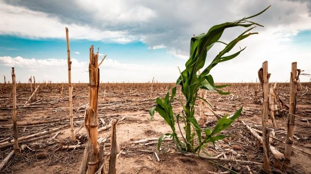 Das BMBF stellt rund 15 Millionen Euro für Forschungsprojekte mit einer Laufzeit von fünf Jahren zur Verfügung, die sich mit den Zusammenhängen von Klimawandel, Umweltverschmutzung und Gesundheitsrisiken befassen. Anträge können bis Anfang August eingereicht werden. (Foto: Scott / stock.adobe.com)