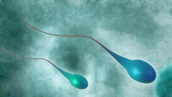 Forscher erzeugen aus Stammzellen funktionsfähige Spermien