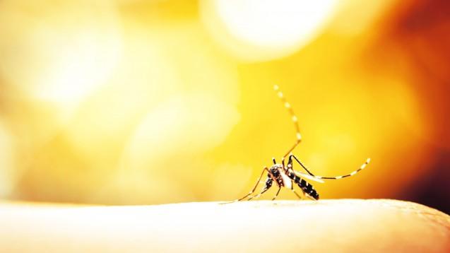 In Ghana, Kenia und Malawi sind seit 2019 mehr als 650.000 Kinder gegen Malaria geimpft worden. (Foto: Auimeesri / AdobeStock)