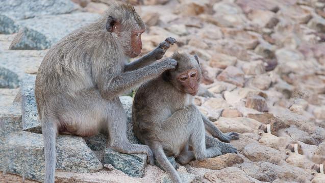 Optimal zur Entlausung: Die Kombination von Läusemitteln und dem Auskämmen der Läuse. (Foto: naowarat / stock.adobe.com)