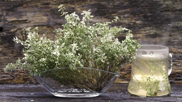 Thymian: aromatisch gegen Husten