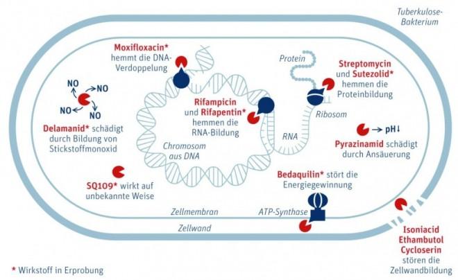 D1112_ck_AuT_Tbc_Bakterium.jpg