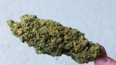 Wie viel Gramm Cannabis als Eigenbedarf durchgehen, ist in Deutschland nicht einheitlich geregelt. (Foto: Remo)