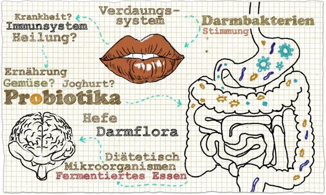 Darmgesundheit und Probiotika