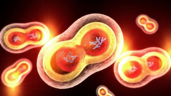 Ursache für Unterdrückung der Immunabwehr gefunden?
