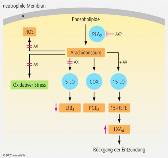 ambroxol-1.eps