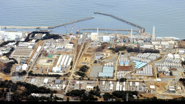 Fische um Fukushima kaum noch belastet