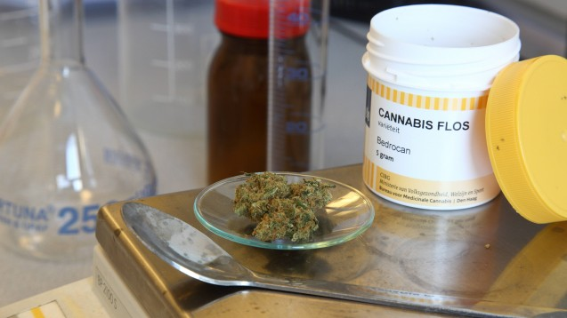 Cannabis als Medizin: Ob es mit der Genehmigung klappt, hängt laut Barmer nicht zuletzt davon ab, wie fit die Ärzte in diesem speziellen Therapiegebiet sind. (Foto: imago images / epd)