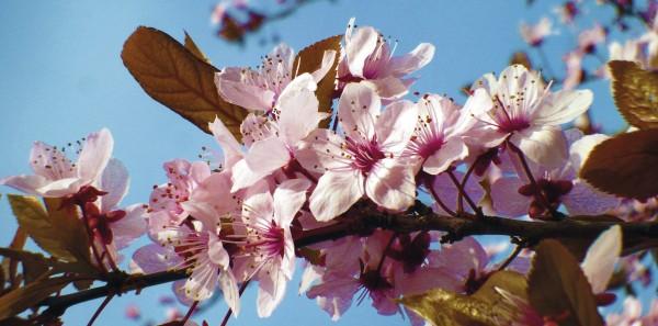 Die Energie der Blüten nutzen