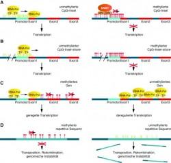 D0111_du_Epigenetik_03.jpg