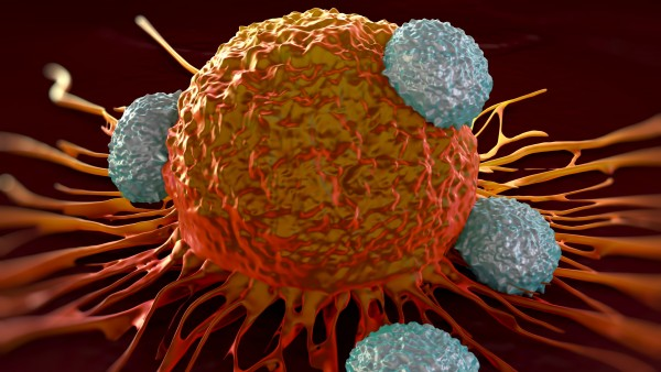 FDA stoppt Studie zu Krebs-Immuntherapie