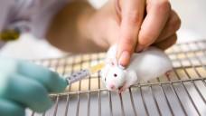 Forscher haben ein neues Maus-Modell für zwei schwere neurologische Erkrankungen erzeugt. (Foto: Vit Kovalcik/Fotolia)