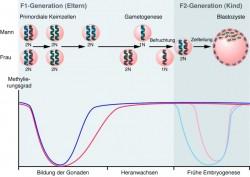 genomic impr