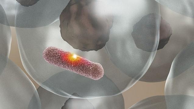 Das Enzym MPO stellt eine aggressive Säure her, die ein Loch in die  Bakterienhülle brennt und den Eindringling abtötet, ohne das umgebende  Gewebe zu schädigen. (Bild: Universität Basel, Biozentrum)