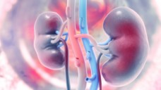 Sotagliflozin verschlechtert initial die glomeruläre Filtrationsrate der Niere stärker als Placebo - ein normaler Effekt? Oder erholt sich die Nierenfunktion wieder? (b/Foto: Crystal light / stock.adobe.com)