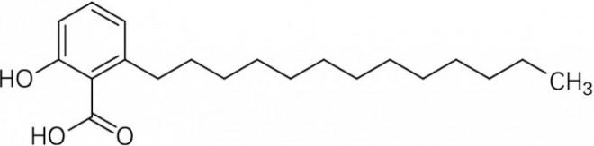 Ginkgolsaeure-C13-0.EPS
