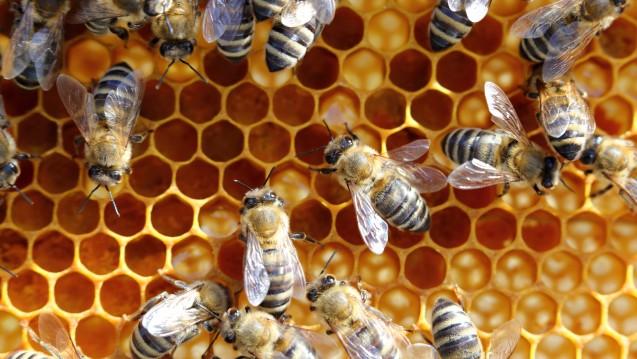 Menschen sollen es den Bienen gleich tun: Eine Krebstherapie soll an der Uni Würzburg per Schwarmfinanzierung unterstützt werden. (Foto: rupbilder / Fotolia)
