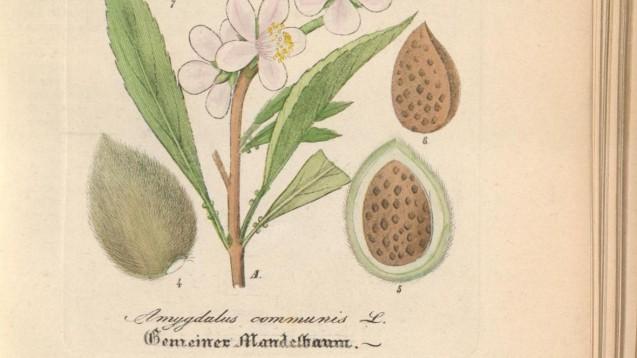 """Die Sammlung enthält sehenswerte Stücke, darunter auch einen """"Hand-Atlas sämmtlicher medicinisch-pharmaceutischen Gewächse oder naturgetreue Abbildungen"""". (Foto: Screenshot .ub.uni-duesseldorf.de  /daz)"""