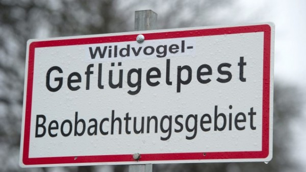 Vogelgrippe in elf Bundesländern gemeldet