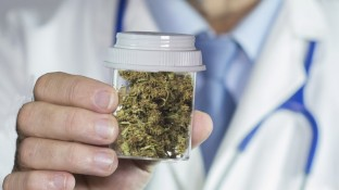 Sprunghafter Anstieg bei Medizinal-Cannabis