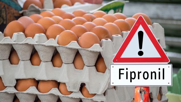 Wieder wurde in Eiern Fibronil nachgewiesen. (Foto:animaflora / stock.adobe.com)