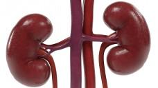 Nach erfolgter Nierentransplantation müssen Patienten lebenslänglich Immunsuppressiva einnehmen. (Foto: 3drenderings / Fotolia)