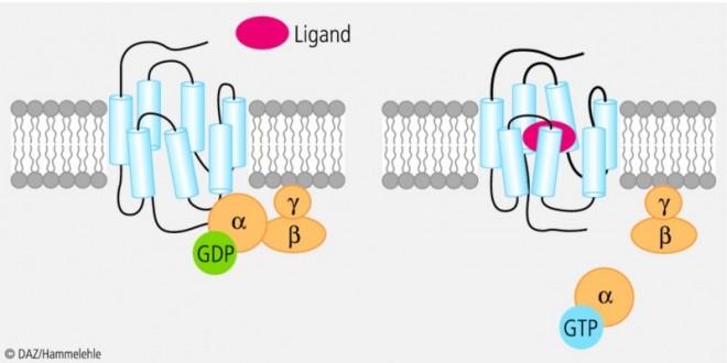 g-Proteine.eps