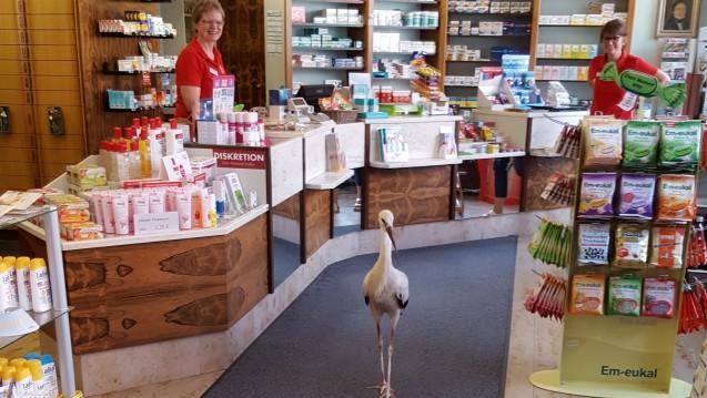 Wo kommt der denn her? Apothekerin Gabriele Sehring-Castelli und eine Mitarbeiterin erhielten am Montagnachmittag überraschenden Besuch. (Foto: Helmut Biehler)