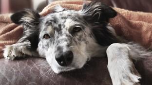 Kein Paracetamol für Hund und Katz!
